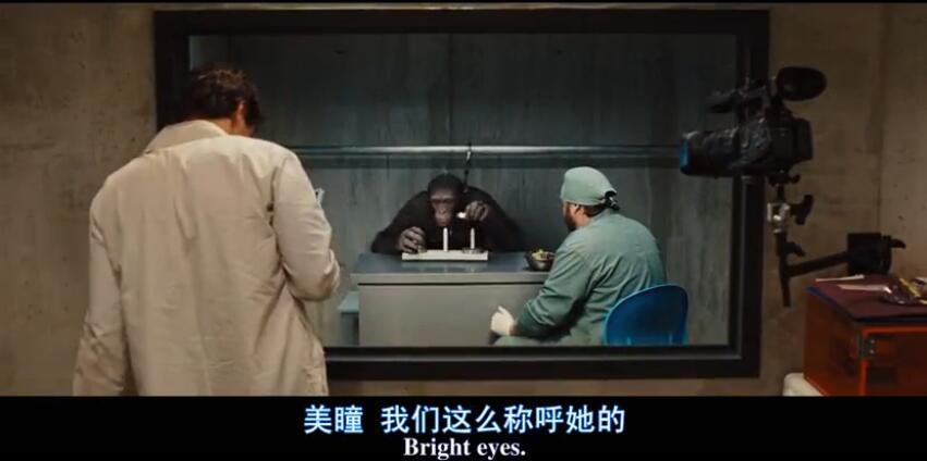 实验中的黑猩猩